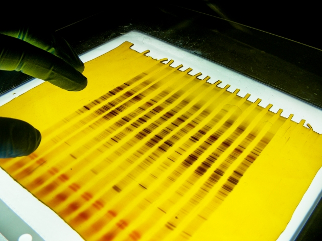 Electroforesis para estudiar comunidades microbianas en el CBUdeC